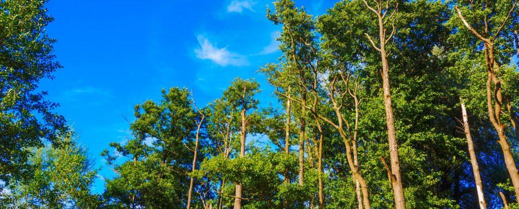 las i niebo