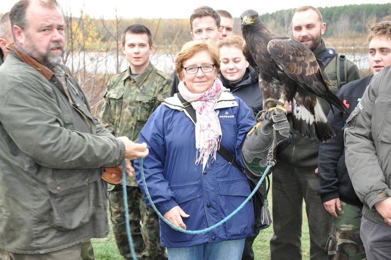 Łowy sokolnicze Zagnańsk 2013